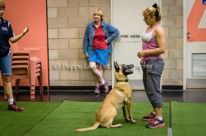 Stacy Peardot Agility Training Clinic